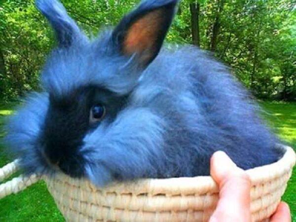 petshop kelinci